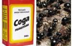 Как действует сода на муравьев