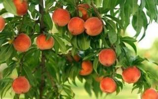 Как и когда обрезать персиковые деревья