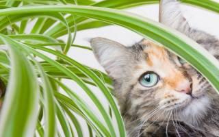 Как закрыть цветочный горшок от кошки