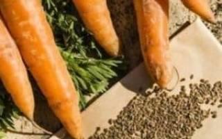Как появляются семена моркови