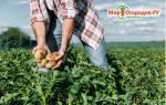 Как закислить известковую почву