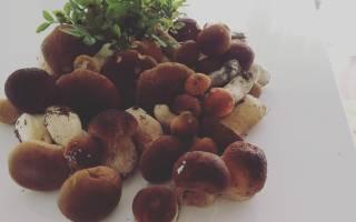 Как приготовить солянку на зиму из грибов