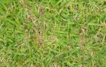 До какого времени можно сажать траву