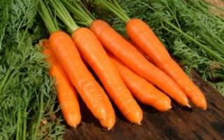 Как обработать морковь перед хранением