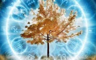Дерево по знаку зодиака и дню рождения