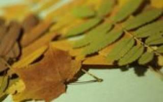 Как засушить листья для гербария