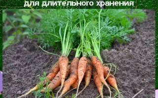 В каком месяце собирать морковь и свеклу