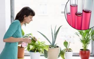 Как поливать марганцовкой цветы