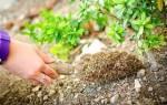 Как обогатить азотом почву