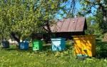 Как в домашних условиях разводить пчел в