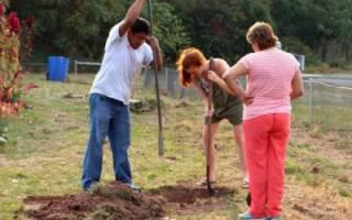 В каком месяце осенью сажать деревья