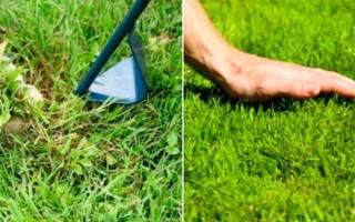 Как называется газонная трава