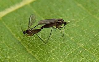 Грибной комарик как избавиться