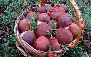 Во что собирать грибы если нет корзины