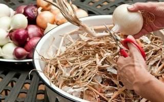 Как правильно обрезать лук