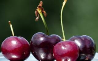 Как выбрать сорт вишни