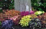 Как красиво оформить землю под деревом
