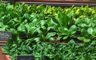 Выращивание зелени в теплице зимой как бизнес