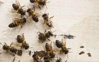 Как избавиться от пчел в доме в стене