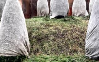 Как правильно укрывать на зиму растения