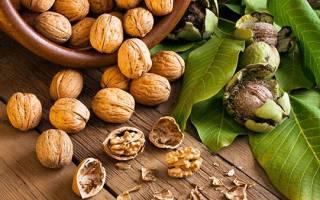 Как правильно собирать орехи грецкие