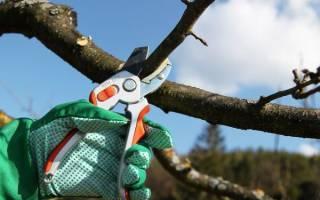 Как обрезать плодовые деревья осенью
