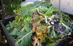 Для каких растений подкормка из мясного фарша
