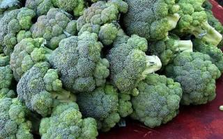 Как вырастить дома брокколи