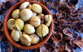 Как вырастить конский каштан из ореха в домашних условиях