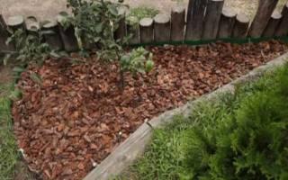 Как избавиться от крапивы на участке