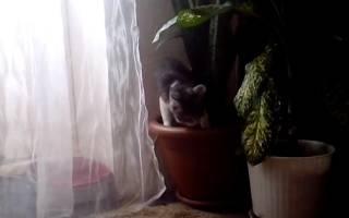Как закрыть горшки с цветами от кошки