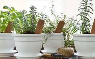 Как вырастить на подоконнике овощи