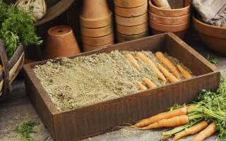 Если морковь завяла как восстановить