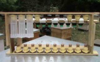 Как выводят пчелы матку