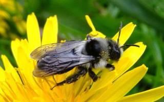Как выгнать из дома пчел