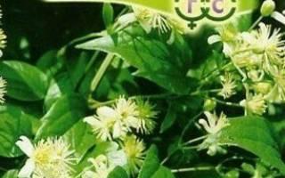 Как посеять клематисы семенами
