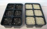 Как вырастить примулу из семян