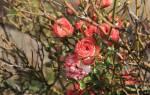 Как правильно утеплять розы