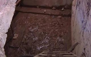 Как избавиться от улиток в подвале