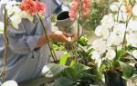 Как понять как поливать орхидею