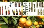 Как привить мандарин из косточки в домашних условиях
