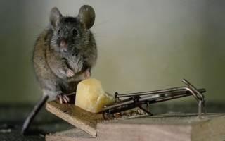 Защита от мышей в деревянном доме на зиму