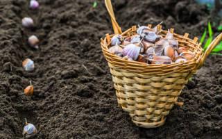 Как подготовить грядку осенью для чеснока