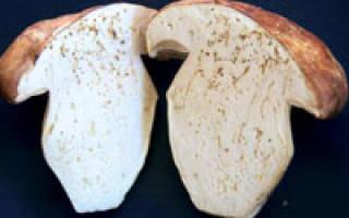 Зачем грибы замачивать в соленой воде