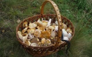 Зачем грибы варить с луком