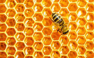 Зачем пчелы запечатывают ячейки сотов