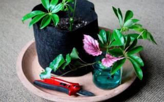 Как можно размножать комнатные растения
