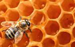 Зачем натощак пить воду с медом