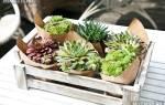 Как вырастить суккуленты из семян в домашних условиях
