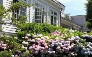 Как красиво разбить цветник на даче